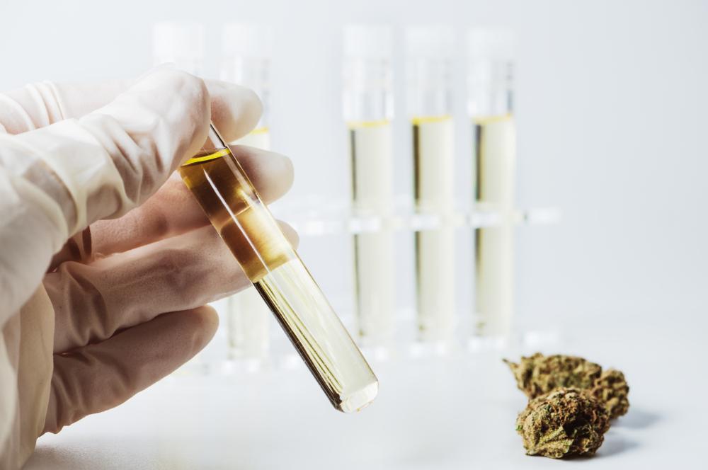 Abogados y farmacéuticos tendrán a cargo seminario educativo de cannabis medicinal en Mayagüez