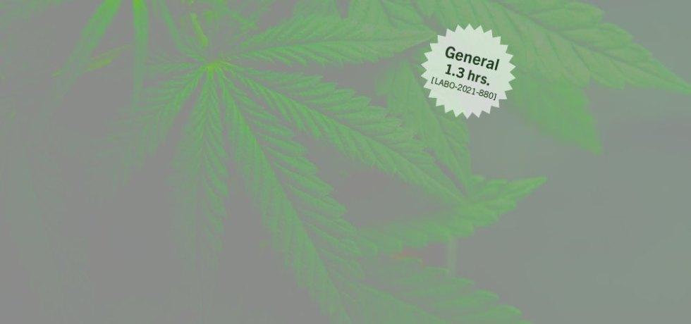 Cannabis medicinal: Marco legal en el contexto laboral