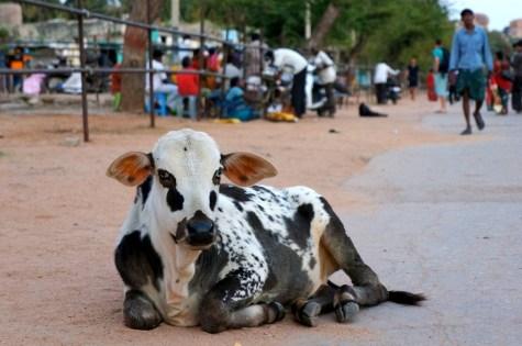 Zwierzęta Indii