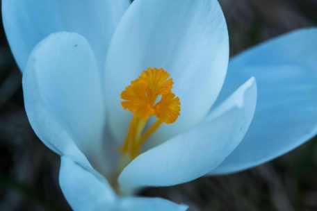 spring2_16569452214_o