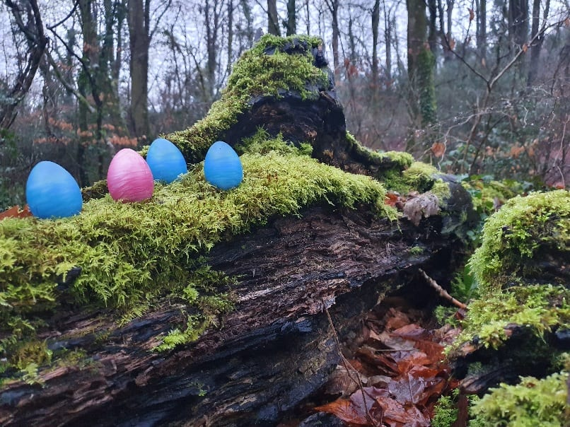 Woodland Adventure sinnovator kegel eggs moss trekking