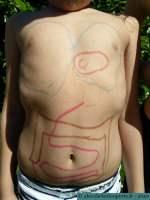 Session dessin des organes - le cadet