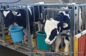 Комбикорм - Рекомендации по кормлению дойных коров