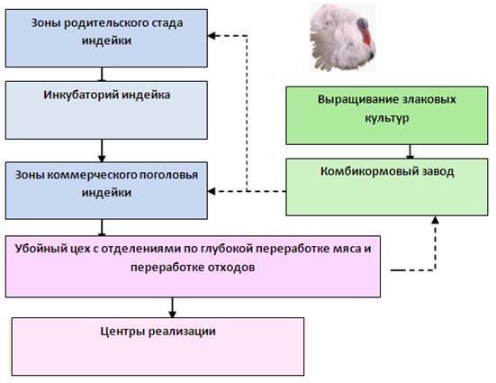 Структура предприятия. Птицекомплекс по выращиванию индейки