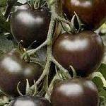 помидоры из израиля