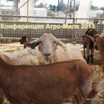 Agro-Milk 2013