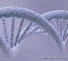 ген, отвечающий за продолжительность жизни растений и обеспечивающий длительное хранение фруктов