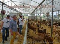 Конференция «Передовое молочное животноводство». Agro-Milk 2014.