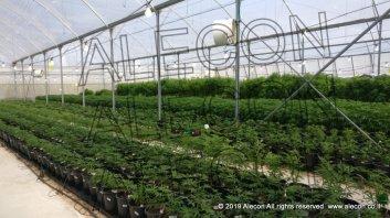 Выращивание медицинской марихуаны в Израиле
