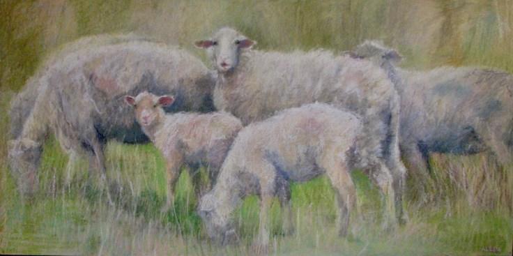 """Six Sheep Grazing 24 """" x 48"""""""