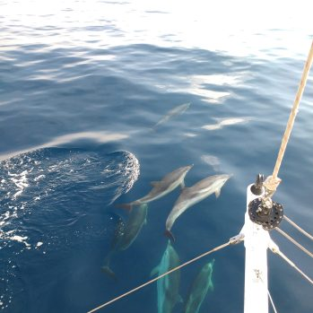 Mayo - Gracias Delfines por vuestra energía de fiesta y alegría incondicional. Gracias Mar por tu inmensidad y profundidad