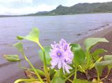 Lake Mainit 1