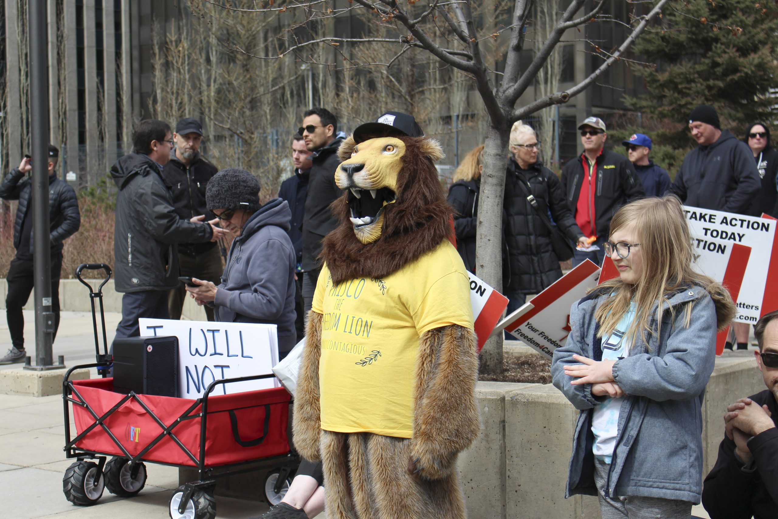 """Frisco """"The Freedom Lion"""" stands and listens to the speakers as they talk at the """"Save Small Business"""" rally in Courthouse Park in downtown Calgary on April 11, 2021. Frisco, the mascot for Calgary Freedom Central, stood with a couple hundred people during the rally that was hosted by Calgary Freedom Central. The rally was for supporting small businesses that are facing hardships as a result of COVID-19 and the provincial lockdown, but also to express disdain for mask usage, vaccines, the COVID-19 testing method, and compliance with the government and the enforcement of said closures. (Photo by Alejandro Melgar/SAIT)"""