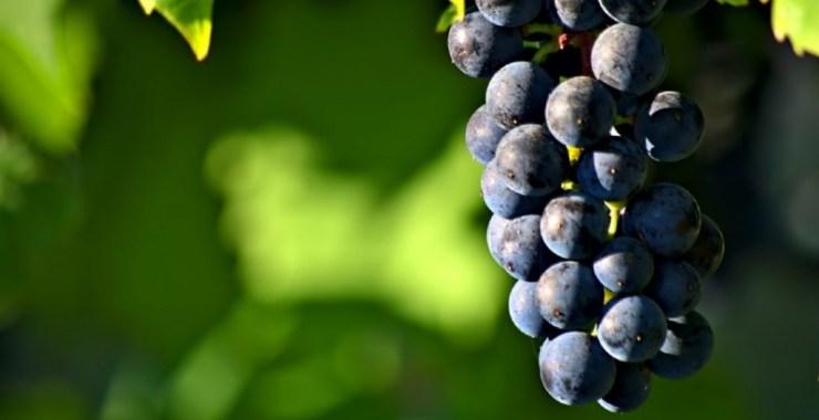 Laboratório Colaborativo na área da Vinha e do Vinho lançado na UTAD