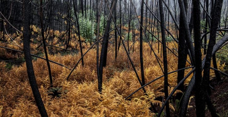 Governo aplica 14 milhões na protecção da floresta gerida pelo Estado