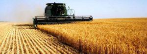 Governo quer aumentar produção de cereais no país
