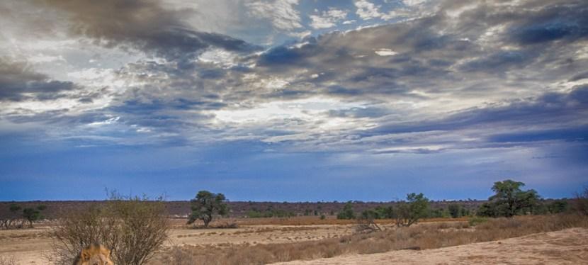 The Kalahari canary