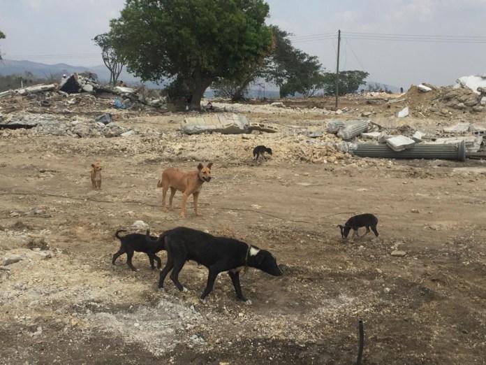 Mascotas, los más vulnerados en los desalojos del Mocri; activistas les buscan hogar 8975f77c fe64 4297 b98b 9f15a719a121