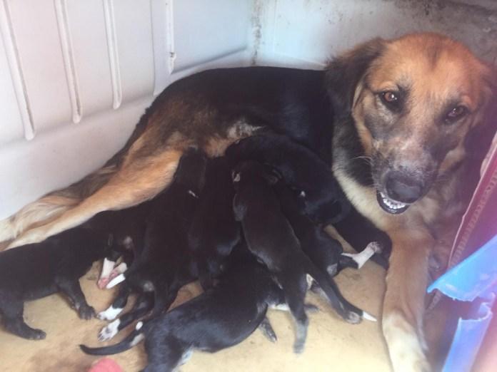 Mascotas, los más vulnerados en los desalojos del Mocri; activistas les buscan hogar c151fc93 1fbf 42ae b22d 7e46f07f90fa