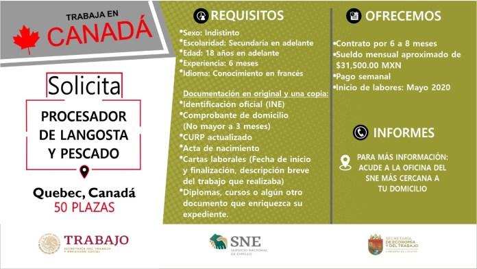 Ofertará Secretaría de Economía y del Trabajo más de mil vacantes WhatsApp Image 2019 10 13 at 2.16.17 PM
