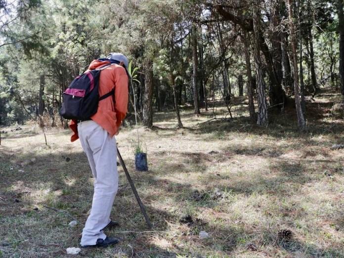 Por ecocida tuvo que plantar 100 árboles como castigo 37c717d7 e6f3 4394 8804 1ec5aaeb58f1