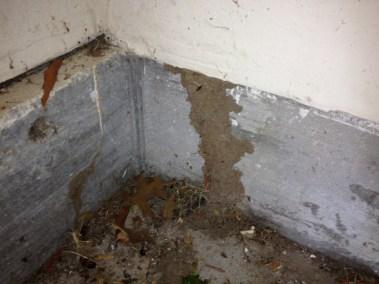Termite Tunnel Joplin MO