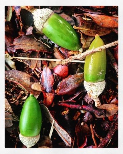 bellotas-slowlife-otoño