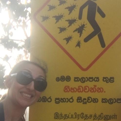 Attenti ai calabroni - Sigiriya, Sri Lanka