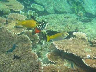 Underwater - Malesia