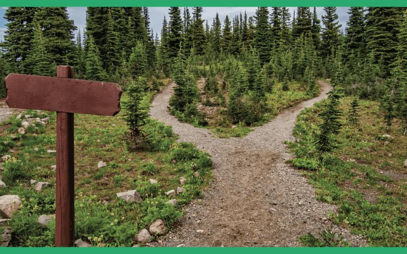 Percorso di Orientamento Personale e Lavorativo: Scegli la tua strada.