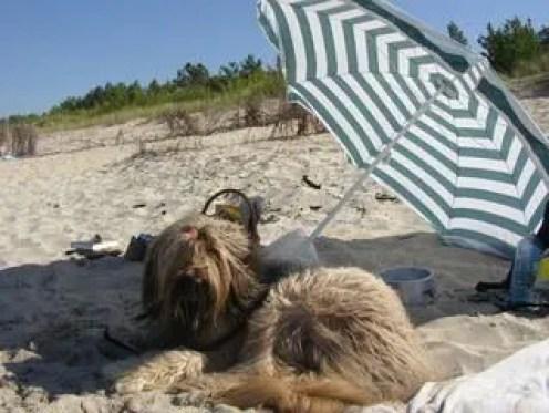 Cane rilassato sotto l'ombrellone