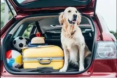cane in macchina insieme ai bagagli