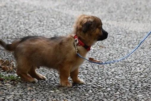 Il guinzaglio migliore per un cucciolo è quello di nylon perchè leggero e facilmente lavabile