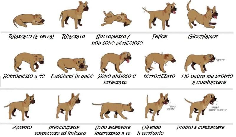 Linguaggio del corpo del cane. La comunicazione