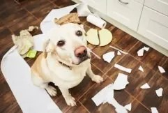 sensi di colpa nei cani?