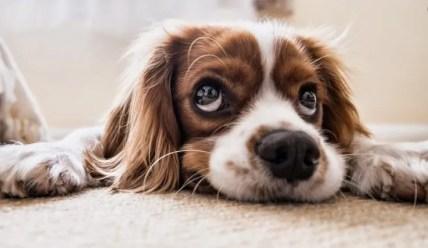 Lo sguardo del cane con le lunette che ci piacciono