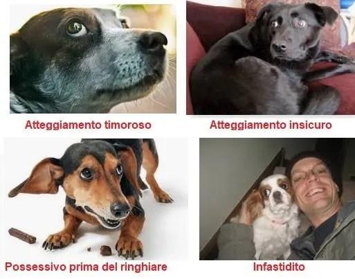 Sguardo negativo del cane