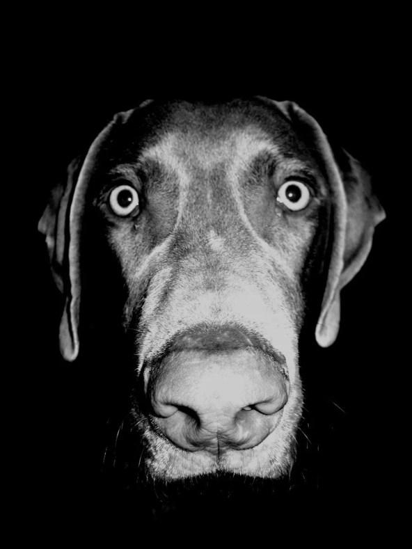 cane domestico