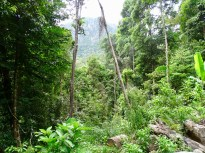 Geoforest Park Langkawi Malaysia Ausflug Ales Consulting International