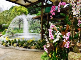 Hibiskus Garten Kuala Lumpur Malaysia
