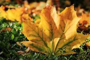 tendencias de otoño