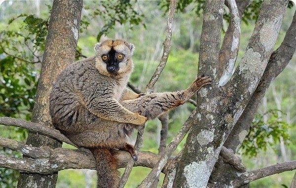 Oeste de Madagascar, el sitio salvaje de los Tsingy de Bemaraha