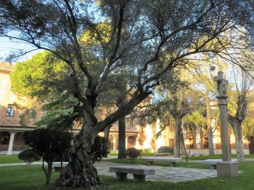 Universidad cisneriana