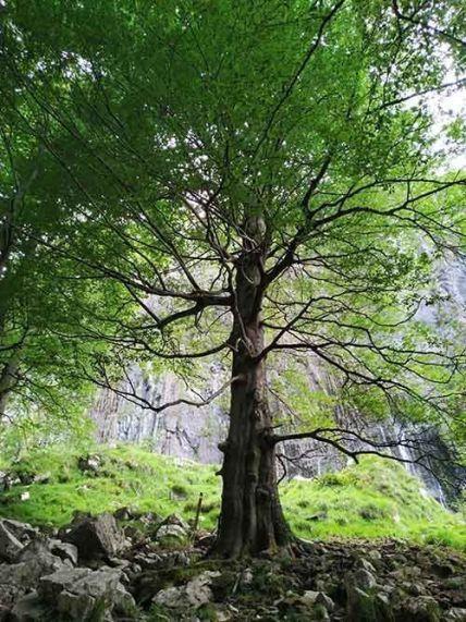 Cascada del Asón en el Valle de Soba