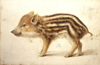 a wild boar Hans Hoffman
