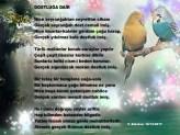 Devrimci Aleviler Birliği DAB Alevi Kızılbaş Bektaşi pir sultan cem hz Ali 12 imam semah Feramuz Şah Acar dostluk veli balaban