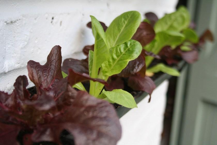 salad guttering