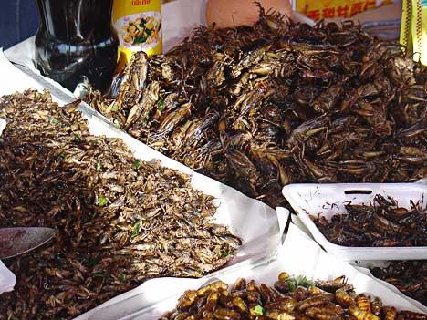 bucatarie cu insecte