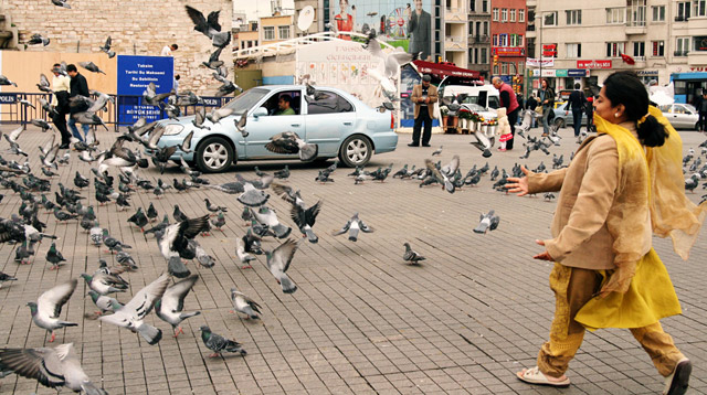 Pigeons in Taksim square, Istanbul