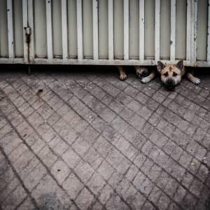 Desperate Dogs - A photo by Alex Leonard